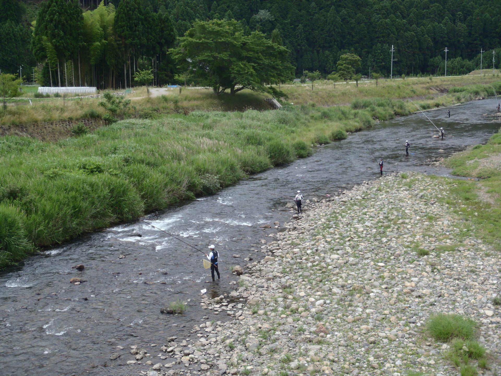 上桂川の鮎釣り